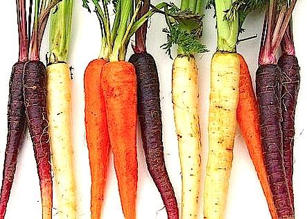 carrots-jpeg
