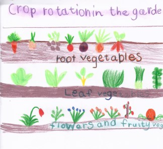 crop-rotation-from-farming-main-lesson-by-zoe-baker